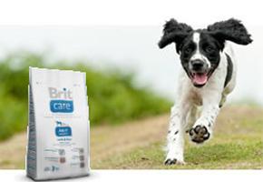 Alimento Premium para tu Mascota